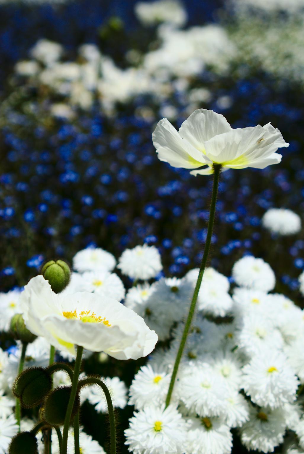 {filename}/img/mainau-kvetiny-4.jpg